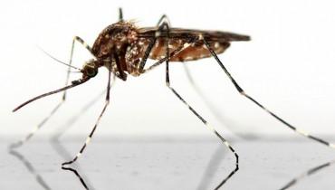 jak-bronic-sie-przed-komarami