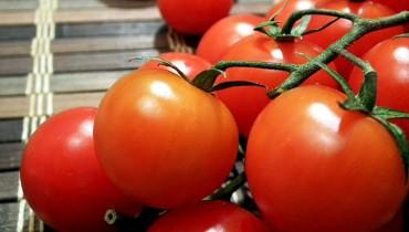 jak-hodowac-pomidory