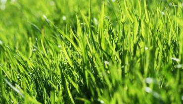 jak-nawozic-trawnik