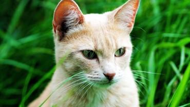 jak-odstraszyc-koty