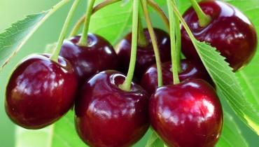 jak-pryskac-drzewka-owocowe