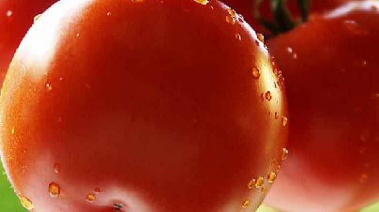 Jak hodować pomidory