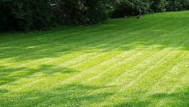 Jak napowietrzać trawnik
