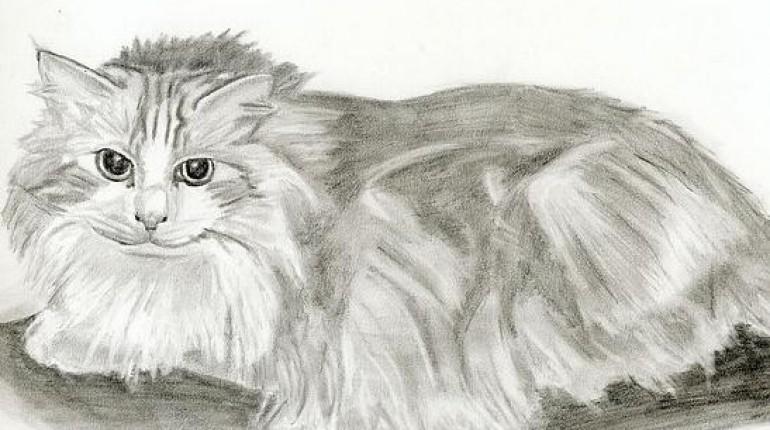 Jak narysować kota