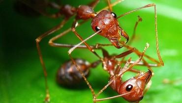 Jak odstraszyć mrówki