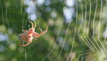 Jak tępić pająki