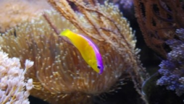 Jak wpuszczać ryby do akwarium