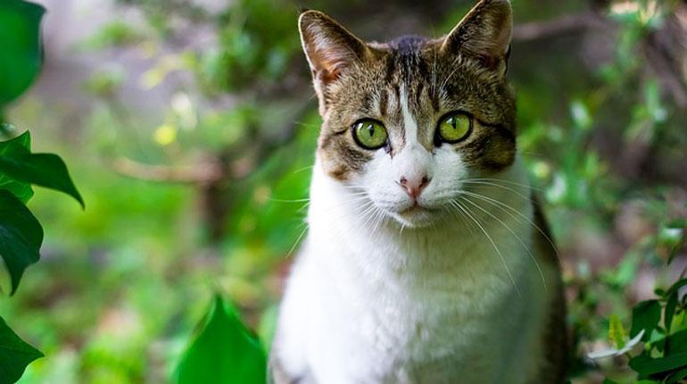 koty-jak-je-odstraszyc
