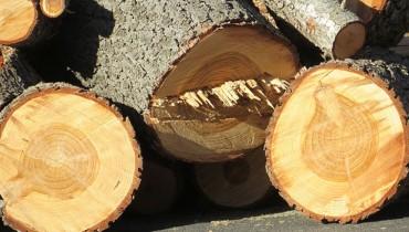 jak-okreslic-wiek-drewna