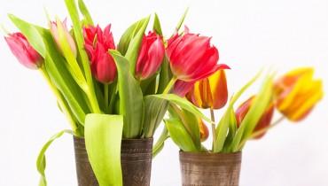 jak-przedluzyc-trwalosc-kwiatom-cietych