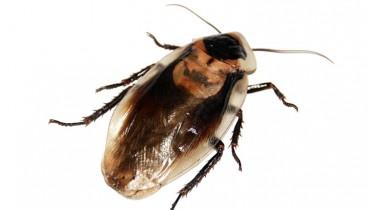 jak-sie-pozbyc-karaluchow