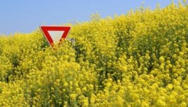 Jakie wady ma GMO?