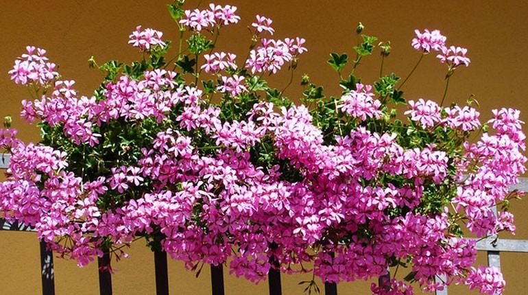 http://www.mporady.pl/wp-content/uploads/2013/04/jak-wybrac-kwiaty-na-balkon-770x430.jpg