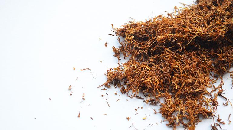 tyton