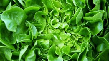 jakie-wlasciwosci-odzywcze-ma-salata