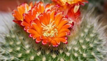 jak-dbac-o-kaktusy
