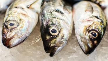 jak-wybrac-swieza-rybe