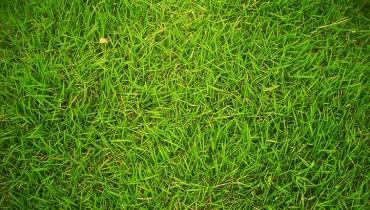 jak-dbac-o-trawnik
