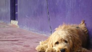 Jak rozpoznać nowotwór u psa?