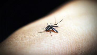 mosquitoe-1548946_960_720