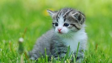 Jak bawić się z kotem