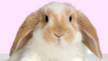 Jak bawić się z królikiem