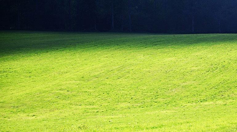 trawnik2
