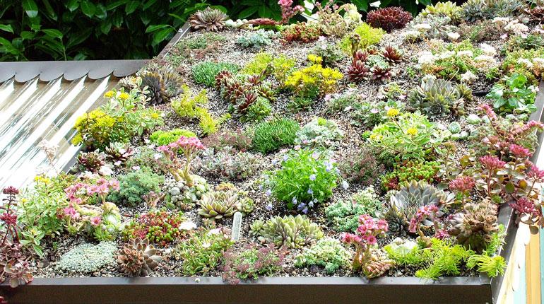 zielony-dach